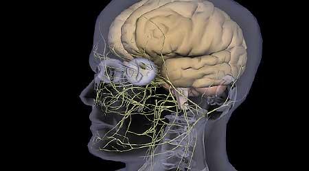 diferentes tipos de paralisia cerebral