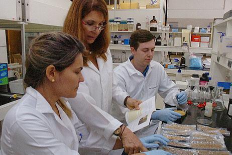 Foto: Francisco Emolo/Jornal da USPFCF_Pesquisa  sobre as propriedades do pólen apícula