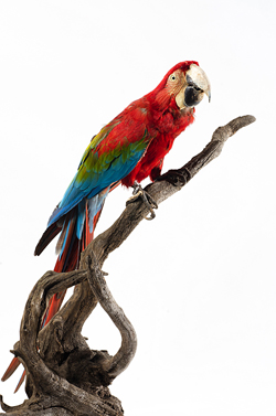 Foto: Div. MZUSPExposição Olhares Cruzados, Museu de Zoologia