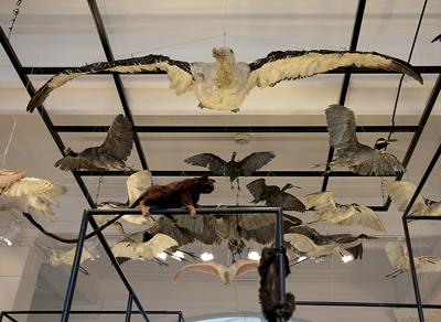 Exposição no Museu de Zoologia Foto: Marcos Santos